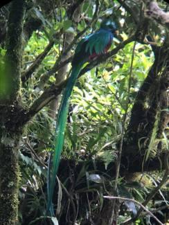 bird monteverde